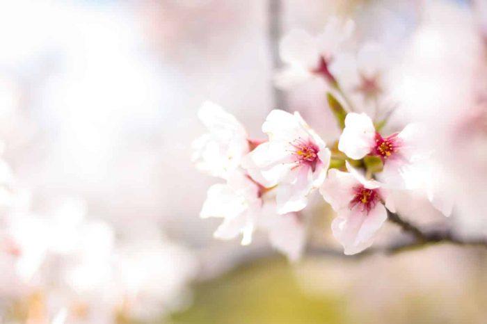 spring-2497200_1280