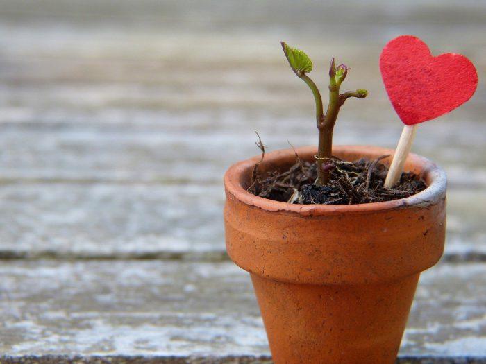 flowerpot-2756428_1280